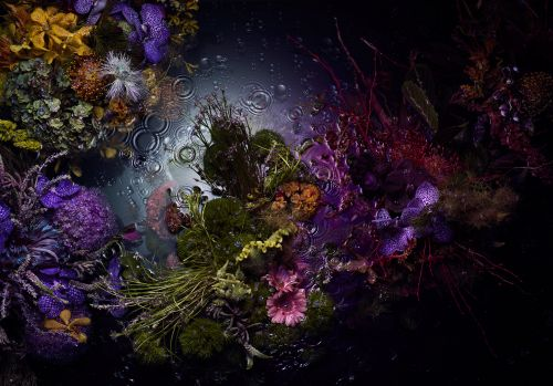 Iridescent Waters Subsume Lush, Floral Bunches in Enchanting Photographs