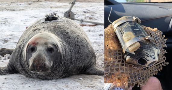 Lost Seal-Mounted Camera Found After Three Years with Footage Intact