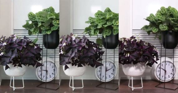Timelapse Captures How House Plants Move in the Day and Sleep at Night